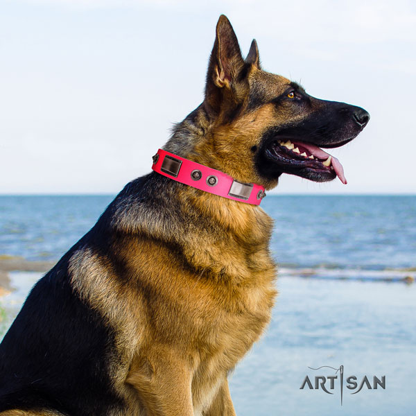 German Shepherd top quality collar with impressive adornments for your four-legged friend