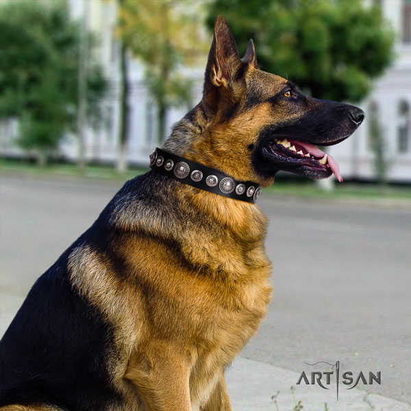 German Shepherd easy wearing collar with remarkable decorations for your canine