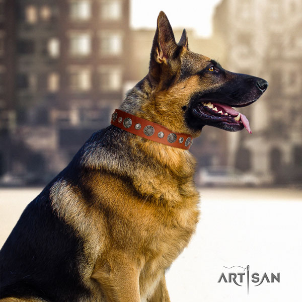 German Shepherd easy wearing collar with extraordinary studs for your pet