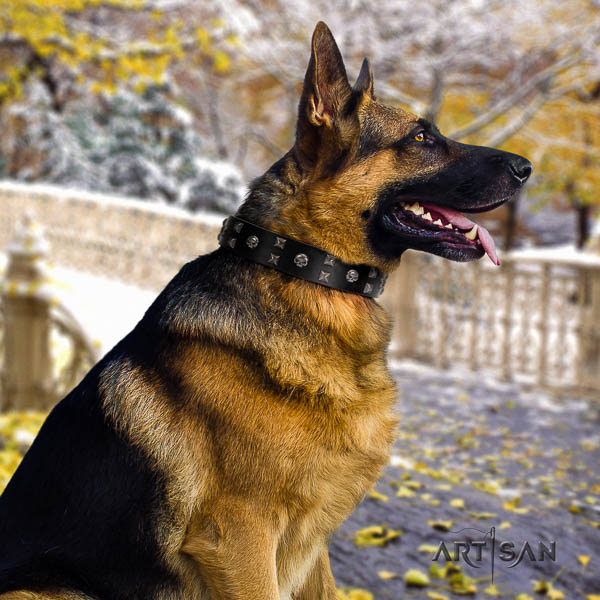 German Shepherd perfect fit full grain leather collar with studs for your dog