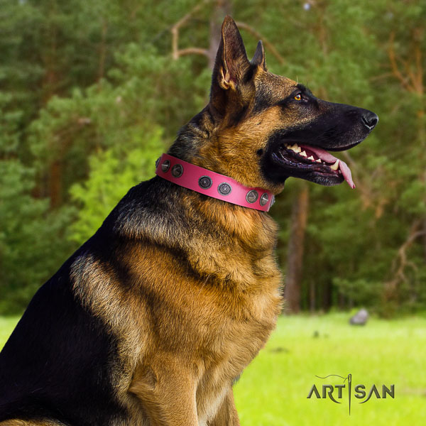 German Shepherd best quality full grain leather collar with adornments for your pet