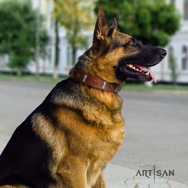 German-Shepherd unique full grain leather collar with studs for your four-legged friend