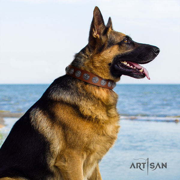 German-Shepherd trendy full grain natural leather collar with adornments for your pet