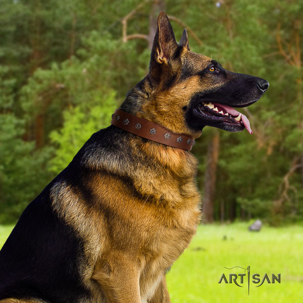 German Shepherd impressive natural genuine leather collar with adornments for your dog