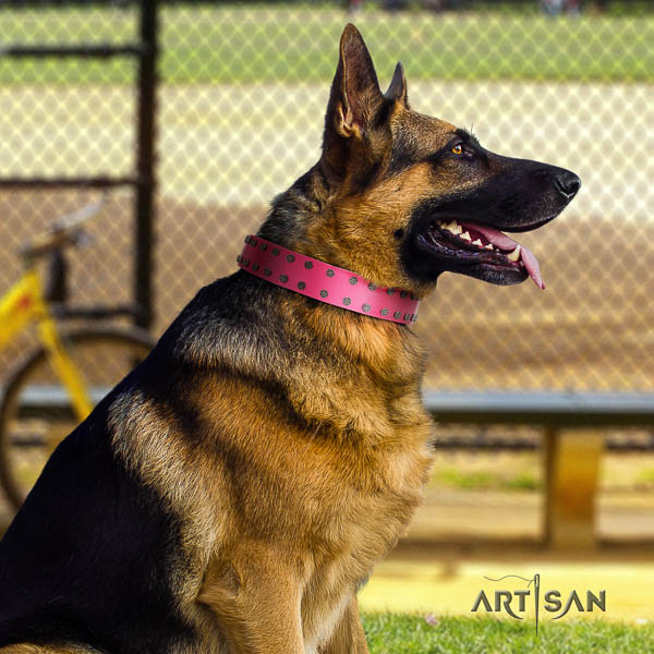 German Shepherd easy to adjust full grain natural leather collar with studs for your four-legged friend