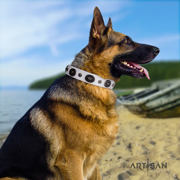 German Shepherd perfect fit collar with significant studs for your canine