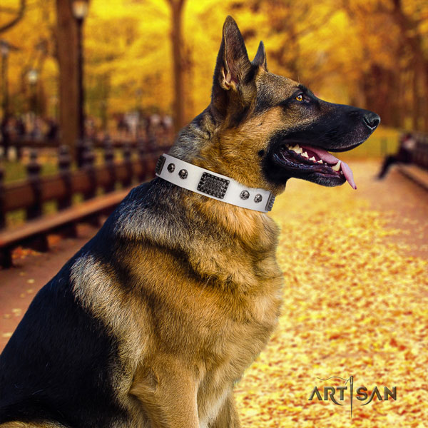 German Shepherd perfect fit collar with fashionable studs for your four-legged friend