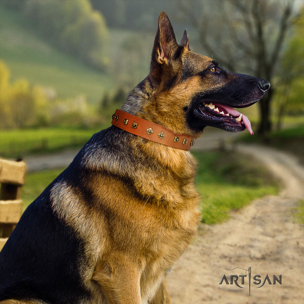 German Shepherd easy to adjust collar with remarkable studs for your dog