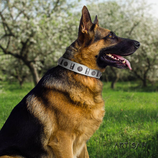German Shepherd trendy leather collar with studs for your dog