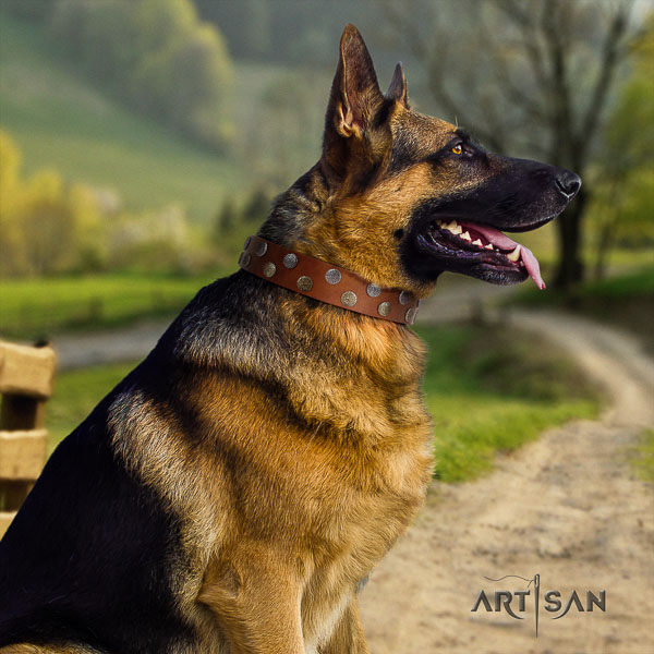 German Shepherd stunning genuine leather collar with adornments for your pet