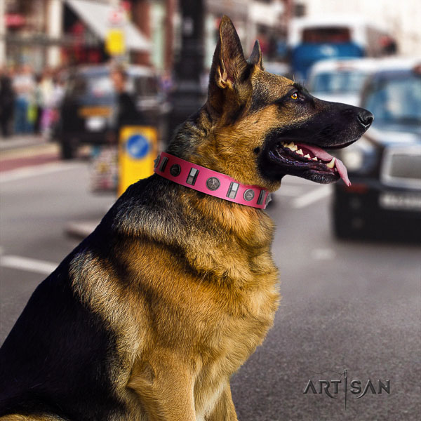 German Shepherd incredible full grain natural leather collar with studs for your dog