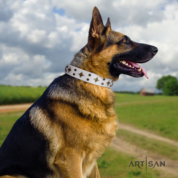German Shepherd top quality collar with extraordinary studs for your dog
