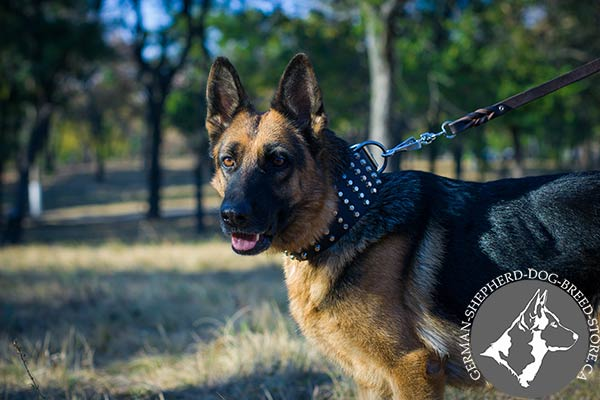 German Shepherd black leather collar of genuine materials adorned with cones for stylish walks