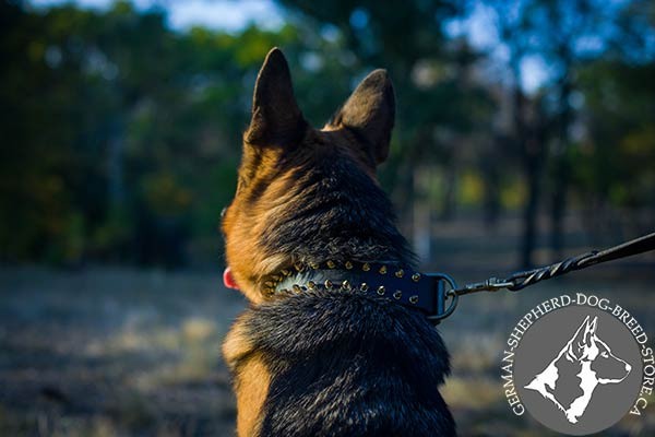 German-Shepherd black leather collar wide with brass plated hardware for daily walks