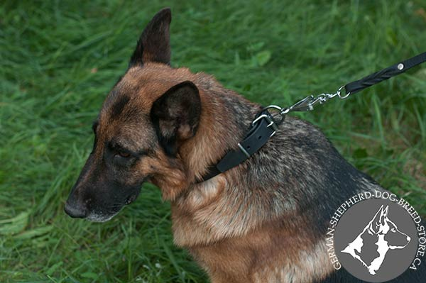 German-Shepherd black leather collar of genuine materials with traditional buckle for walking