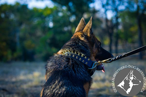 German-Shepherd black leather collar of high quality with spikes placed in row for stylish walks