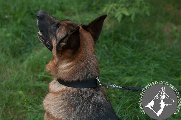 German Shepherd leather collar easy-to-adjust with nickel plated hardware for improved control