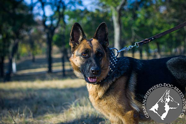 German Shepherd black leather collar extra wide with handset adornment for daily activity