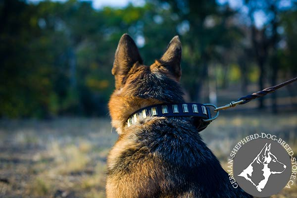 German Shepherd leather collar of genuine materials with brass plated fittings for daily activity