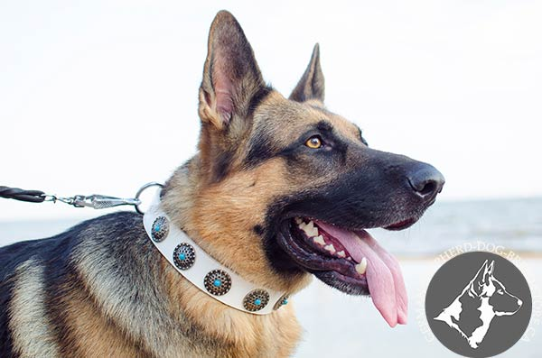 German Shepherd leather collar wide with handset adornment for stylish walks