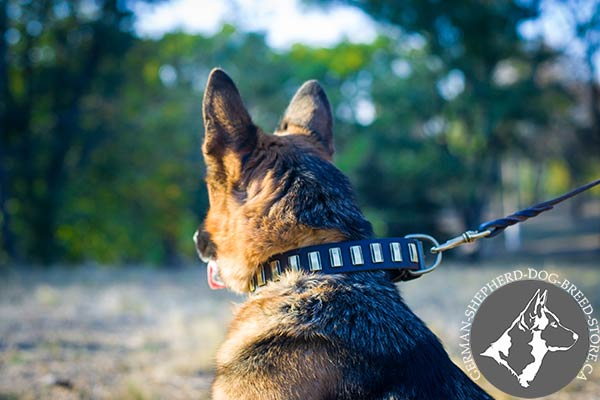 German Shepherd leather collar easy-to-adjust with brass plated hardware for improved control