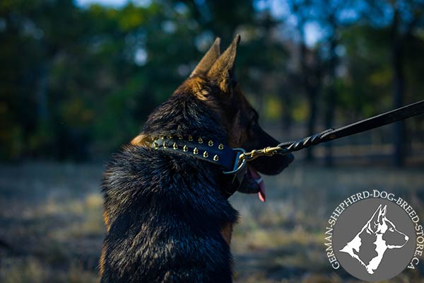 German-Shepherd black leather collar with duly riveted fittings for safe walking