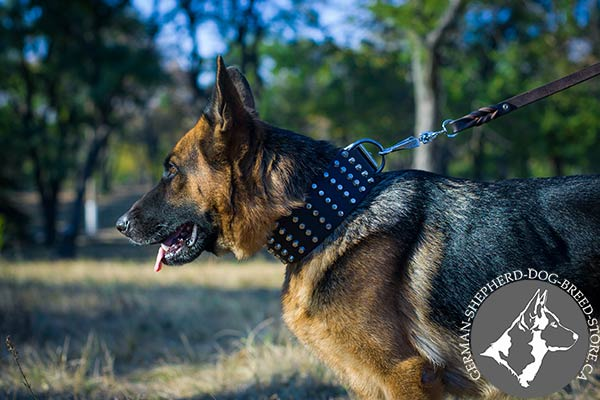 German Shepherd black leather collar with durable nickel plated hardware for quality control