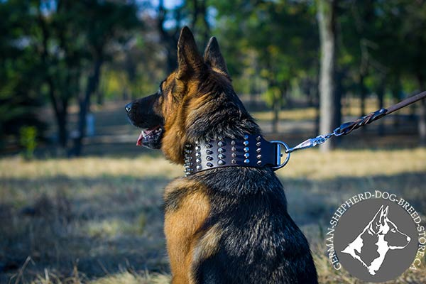 German Shepherd brown leather collar of high quality adorned with spikes and studs  for walking in style