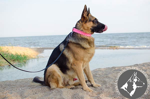 German-Shepherd leather collar of high quality with spikes for improved control