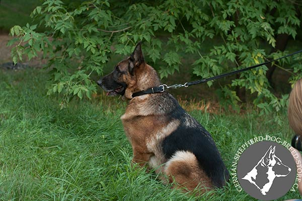 German Shepherd leather collar with strong nickel plated hardware for improved control