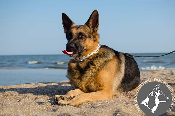 German Shepherd leather collar of high quality with nickel plated fittings for perfect control