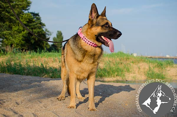 German Shepherd leather collar of classic design with d-ring for leash attachment for perfect control