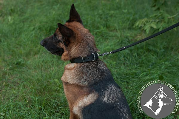German-Shepherd black leather collar with non-corrosive nickel plated fittings for any activity