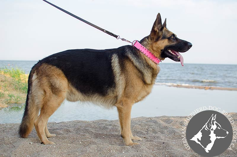 Pink Leather German Shepherd Collar With Spiked In 2 Rows