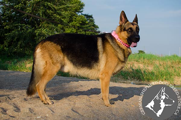 German Shepherd pink leather collar with duly riveted studs for daily activity