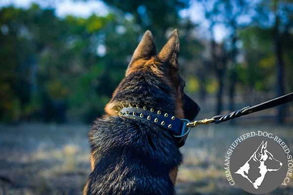 German-Shepherd black leather collar wide adorned with studs for stylish walks
