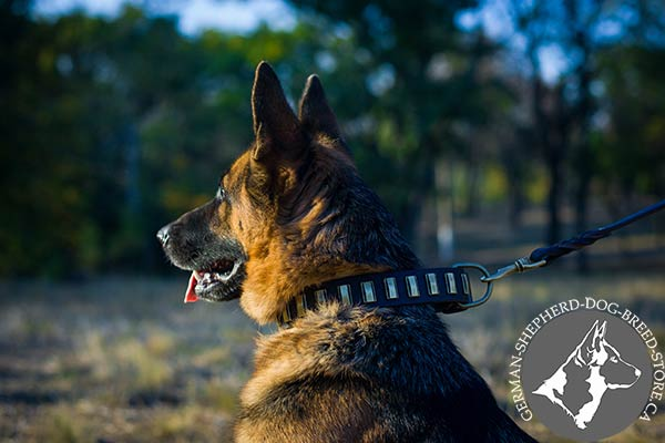 German Shepherd leather collar of high quality with d-ring for leash attachment for quality control