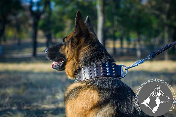 German Shepherd leather collar with strong hardware for daily walks