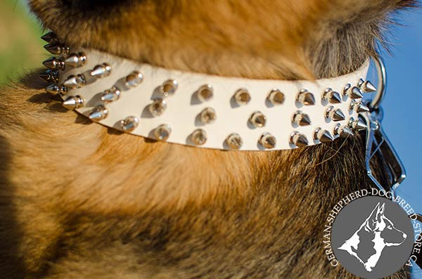 Amazing Leather German Shepherd Collar with Decorative Spikes