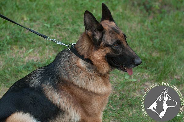 Classic Design Leather Collar for Strong German Shepherd