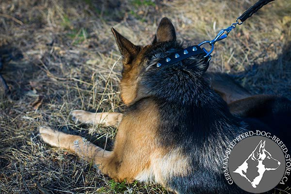 Leather German Shepherd Collar with Smooth Shiny Studs