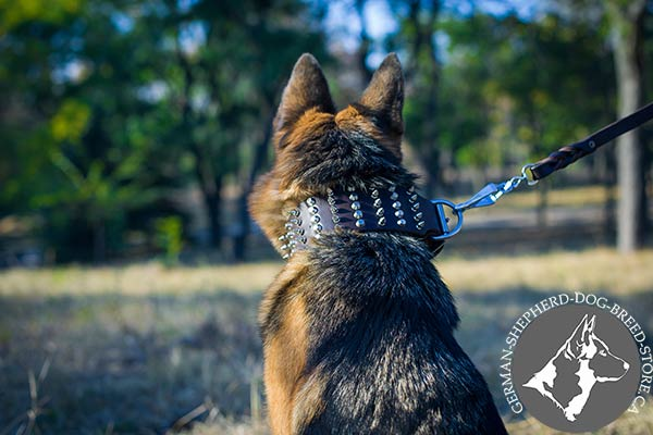 Spiked German Shepherd Collar with Reliable Buckle and Massive D-ring