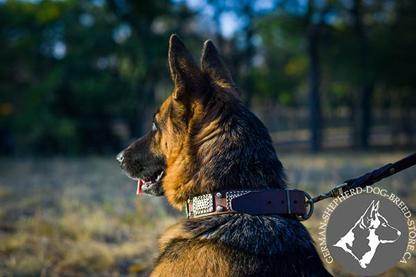 Designer Leather Dog Collar with War Style Decor