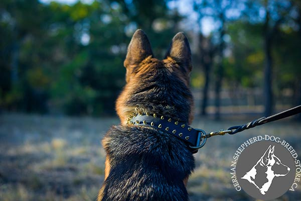 Luxurious  German-Shepherd Collar with Sparkling Spikes