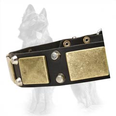 Old Brass Plates on GSD Leather Collar Equally Hand Set