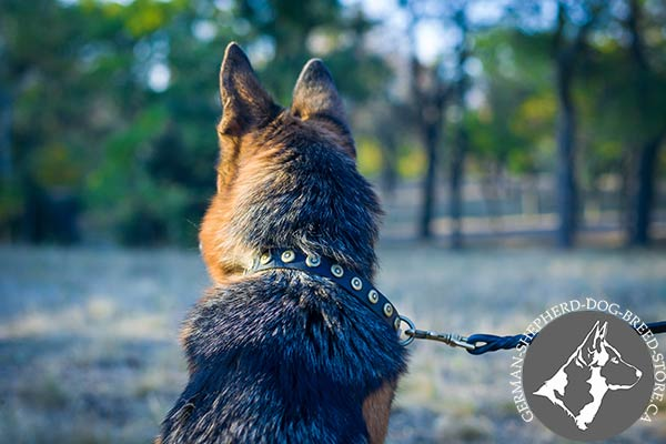 Studded German Shepherd Collar with Strong Brass Hardware