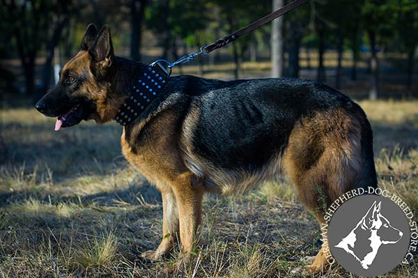 Studded Wide Leather German Shepherd Collar for Everyday Activity
