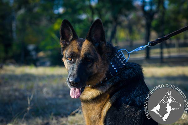 Stylish Dog Collar with Spikes and Studs for Comfortable Walking