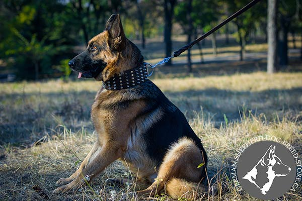 Super Wide Spiked and Studded Leather Collar for German Shepherd