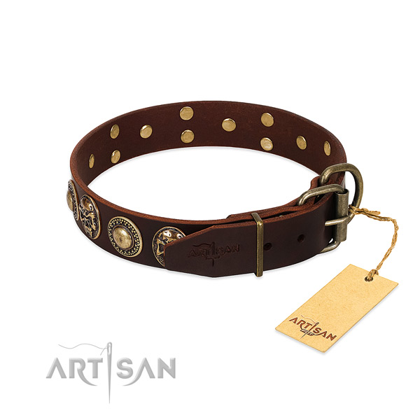 Rust resistant hardware on stylish walking dog collar
